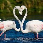 Heart to heart by AntonAlberts
