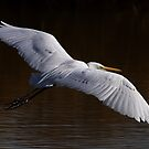 020213 Great White Egret by Marvin Collins
