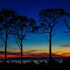 Gulf Coast Sunset by Shari Galiardi