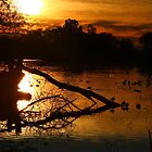 On Golden Pond by Laurie Puglia