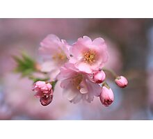 Pink Explosion Photographic Print