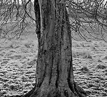 Tree Base  by Lappin90
