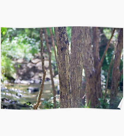 manuka trees and creek, NZ Poster
