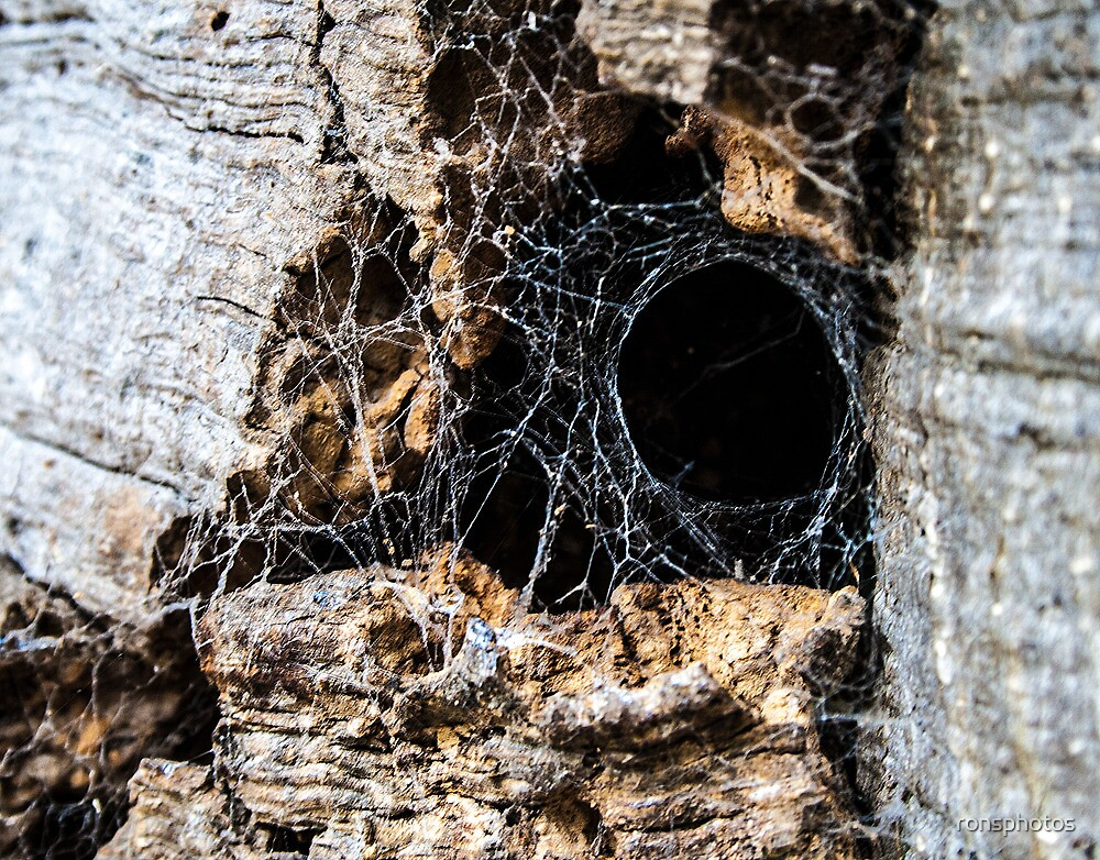 Home for a large spider? by ronsphotos