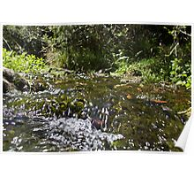 Shallow creek flowing over rocks  Poster