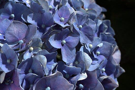 Seeing Blue by Joy Watson
