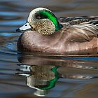 American Wigeon Drake: Reflections in Mirror Pond II by John Williams