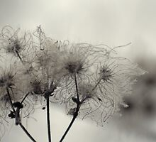 Fluff by photojeanic
