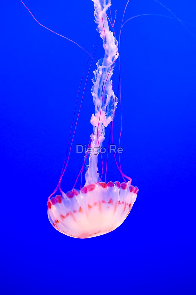 Free Fall Jellyfish by Diego Re