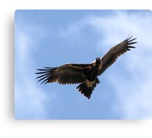 Wedge=Tailed Eagle Canberra Canvas Print