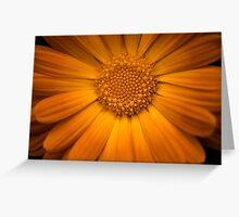 Calendula Officinalis Greeting Card