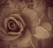 Love's Sweet Bloom by Donna Keevers Driver