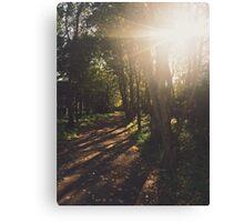 Sunburst Through The Trees Canvas Print