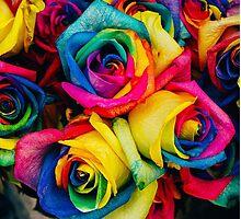 Rose Rainbow Photographic Print