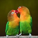 Lovebirds by jimmy hoffman