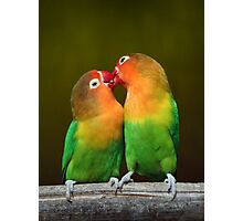 Lovebirds Photographic Print