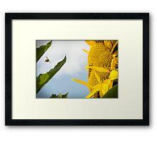 Sun Seeker Framed Print