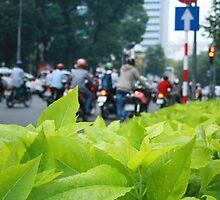 Leaves & Bikes by MomoYeuSunny