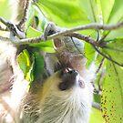 Sloth by Mark Prior