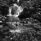 Falling Water  by Lappin90