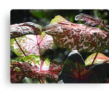 Tropical Plants And Colors - Plantas Y Colores Tropicales Canvas Print