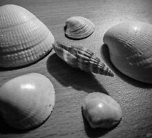 Seashells by Stevie B
