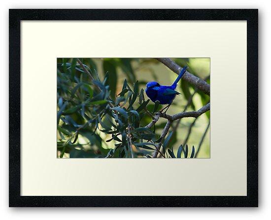 A Beautiful Bit of Blue by Sandra Chung