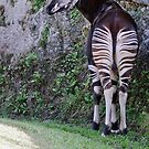 Okapi by Winston D. Munnings
