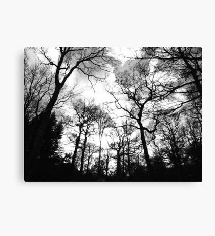 Forest of Living Trees Canvas Print
