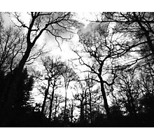 Forest of Living Trees Photographic Print