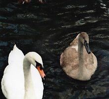 swans by paulamarie64