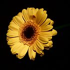 Yellow Flower - lighten the dark by Ellaaa M