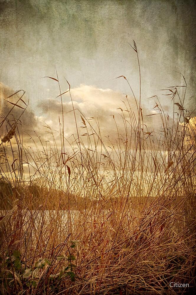 Rush by Nikki Smith