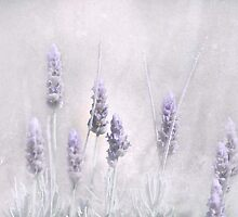 Lavender Essence by garts