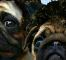 step pugs Sticker
