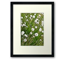 Dandelion background Framed Print