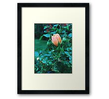 Budding Flower Close Up Framed Print