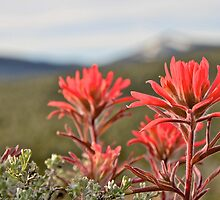 Red Paintbrush by John Butler