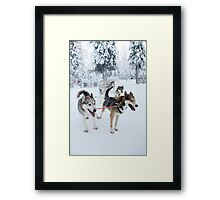 Huskies away Framed Print
