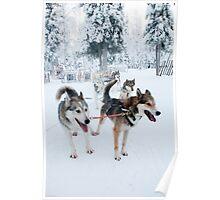Huskies away Poster