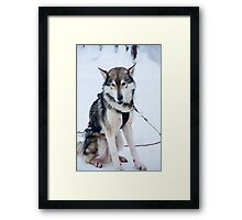 Whats the time Mr Wolf? Framed Print