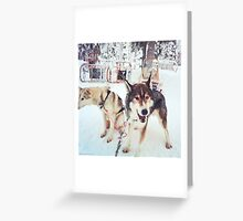 Huskies, Lapland Greeting Card