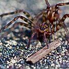 Spider by starwarsguy