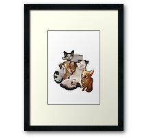 cut and paste cats Framed Print