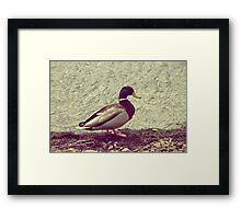 Cheese and Quackers Framed Print