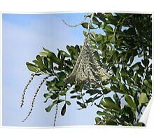 Strange Product of Tree Poster