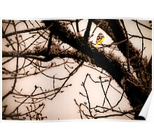 bird in branches Poster