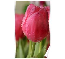 Spring Tulips 2 Poster