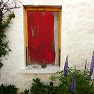 Red Window With Lupins by Fara