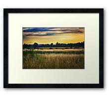 Golden Daze Framed Print